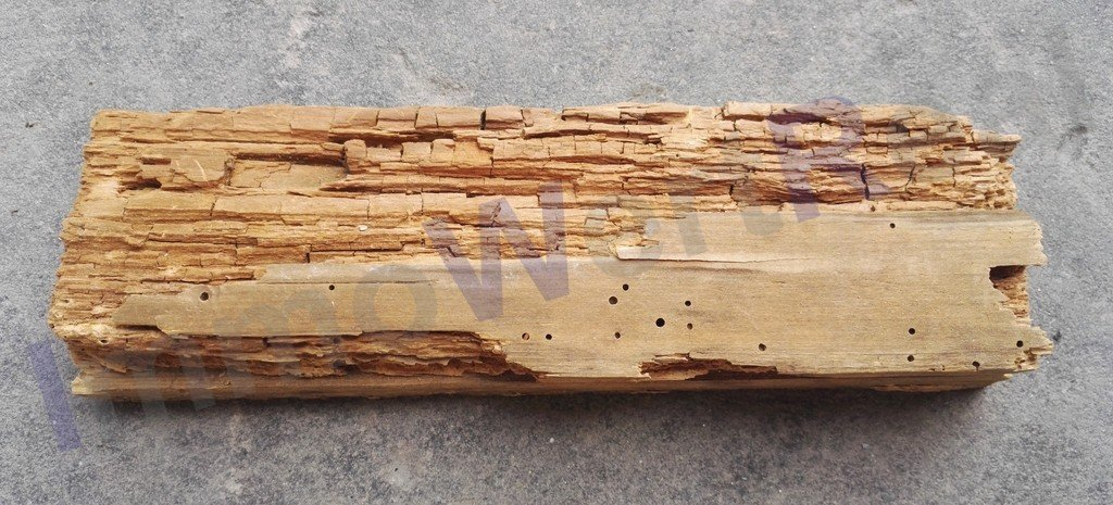 Würfelbruch holzzerstoerende Pilze Holzschaedlinge